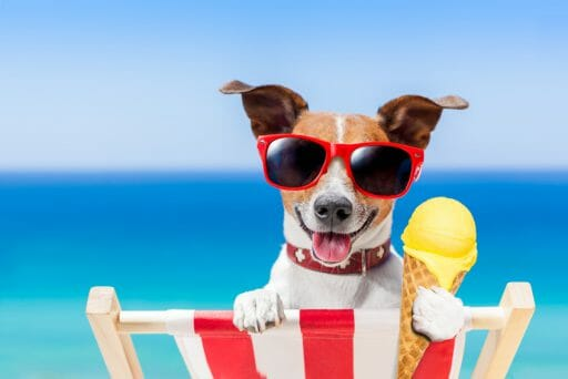 Orthopädisches Hundebett – auch für gesunde Hunde eine sichere Entscheidung
