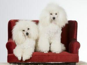 Kleine Vierbeiner brauchen ein orthopädisches Hundebettchen