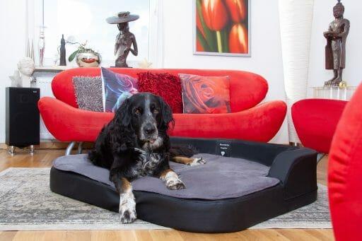 Orthopädische Hundekissen – Vorbeugen auch bei gesunden Hunden!