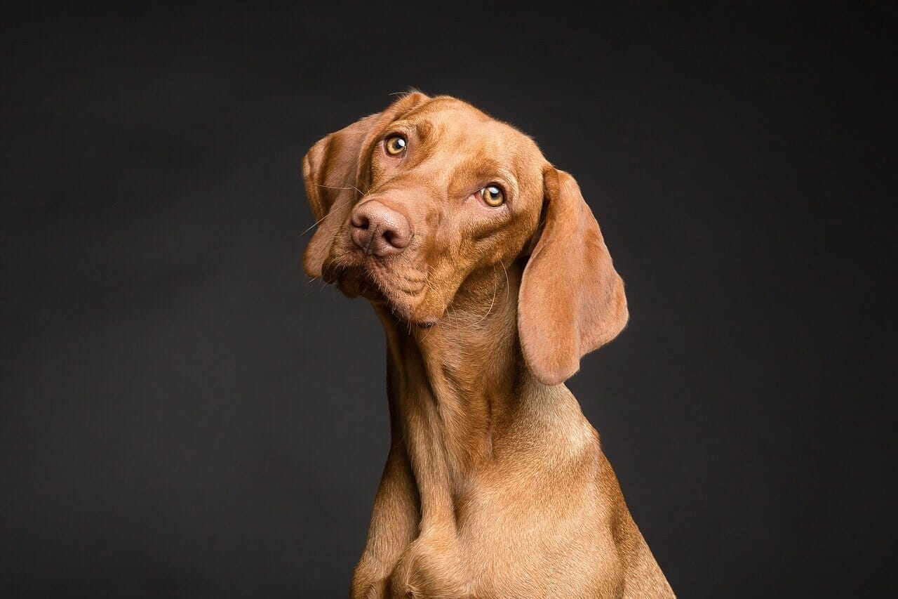 Hund Körpersprache